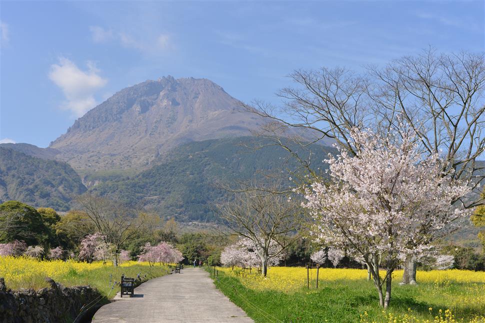 190404火張山花公園