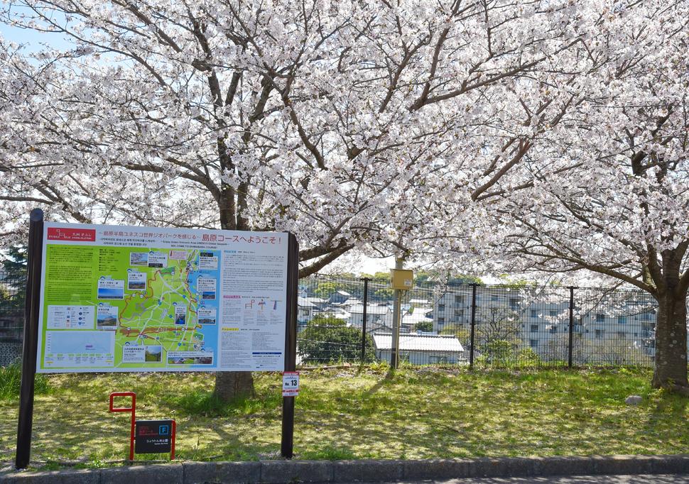 オルレコース上の桜_ひょうたん池公園 (1)
