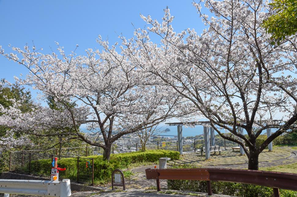 オルレコース上の桜_仁田団地第二公園 (2)