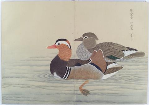 034+201105鳥獣図鑑(松平文庫所蔵資料)(平成23年5月号)鳥獣図鑑(松平文庫所蔵)